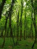 Krommeboom in bos groene gloed royalty-vrije stock fotografie