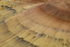 Krommen in het Zand Stock Afbeeldingen