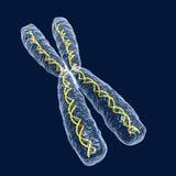 kromosom Arkivbild