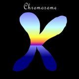 kromosomillustration Royaltyfri Fotografi