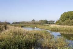 Kromslootpark Almere stock images