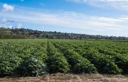 Kronärtskockafält i sydliga Kalifornien royaltyfri foto