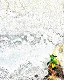 kronärtskockan Arkivbilder
