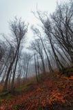 Krona av kala träd i dimma arkivfoton