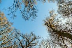 Krona av träd arkivbilder