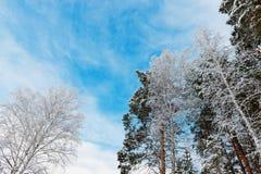Krona av träd i skog med himmel Arkivbild