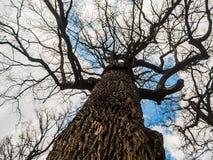 Krona av trädet Fotografering för Bildbyråer