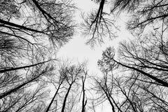 Krona av trädet med himmel royaltyfri foto