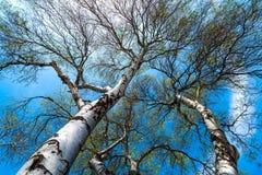 Krona av trädet Arkivfoto