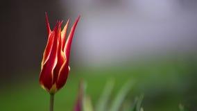 Krona-formad blomma Royaltyfri Bild