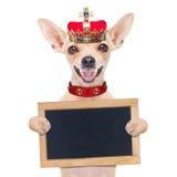 Kronakonunghund Royaltyfri Bild