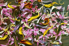 Kronblad av blommor på träbakgrund Royaltyfri Foto