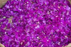 Kronblad av den violetta färgblomman Royaltyfri Foto