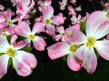 Kronblad av liv Arkivfoto