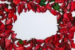 Kronblad av röda rosor på en vit bakgrund arkivbild