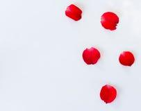 Kronblad av rosor på vit Arkivfoton