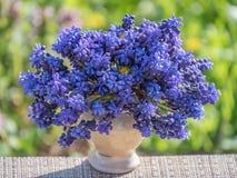 Kronblad för bukett för bakgrund för closeup för blått för trädgårds- violet för blommavårflora naturliga Arkivfoto