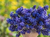 Kronblad för bukett för bakgrund för closeup för blått för trädgårds- violet för blommavårflora naturliga Arkivbilder