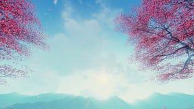 Kronblad för körsbärsröd blomning som faller från träd långsam-mo
