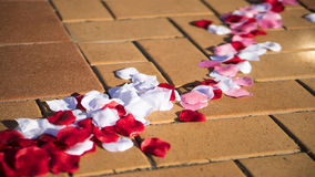 Kronblad på tegelstengolv royaltyfri foto