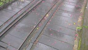 Kronblad på träspåret Arkivfoton