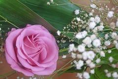 Kronbladen av rosen Royaltyfri Fotografi