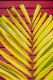 Kronbladpalmblad på färgrik djup väggbakgrund för suddighet Fotografering för Bildbyråer
