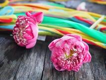 Kronbladrosa färger Lotus For Pray royaltyfria foton