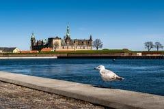 Kronborgkasteel in Helsingor met een Zeemeeuw Royalty-vrije Stock Afbeeldingen
