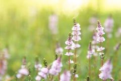 Krone der Blumen lizenzfreies stockfoto