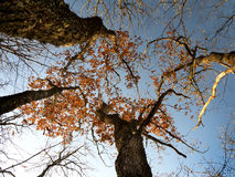Krone der Herbstbäume Lizenzfreies Stockbild