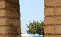 Krone eines Baums zwischen großen Wänden Stockfotografie