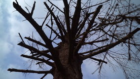 Krone getrocknet herauf Baum stock video footage