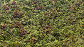 Kronen der Bäume Stockbilder