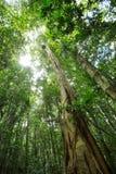 Kronen der Bäume im Wald Stockbild