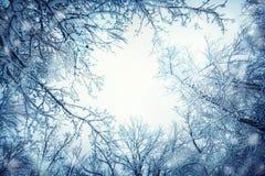 Kronen en takken van bomen met sneeuw tegen winte worden behandeld die royalty-vrije stock foto's