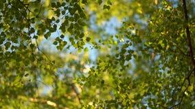 Kronen van bomen stock video