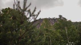 Kronen van bomen die prachtig onder de druk van de wind in de bergen slingeren stock footage