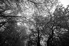 Kronen van bomen en hemel Stock Foto
