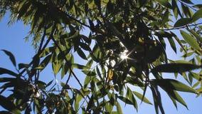 Kronen van bomen met heldere middag stock footage