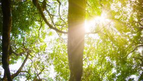 Kronen van bomen met heldere middagzon en stralen stock videobeelden