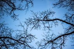 Kronen van bomen zonder bladeren tegen de blauwe hemel Royalty-vrije Stock Afbeeldingen