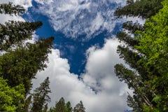 Kronen van lange bomen tegen een bewolkte hemel in Altai, Rusland royalty-vrije stock fotografie