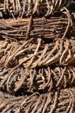 Kronen van wijnstok Stock Afbeelding