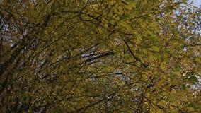 Kronor av träd med den ljusa eftermiddagsolen och den blackmagic ursakortkortet 4,6k för strålar lager videofilmer