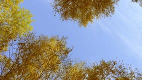 Kronor av träd med den ljusa eftermiddagsolen och strålar arkivfilmer