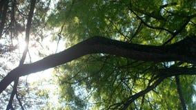 Kronor av träd med den ljusa eftermiddagsolen och strålar solsken till och med sidor långsam rörelse 3840x2160 4K lager videofilmer