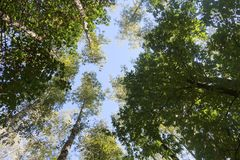 Kronor av träd mot himlen Arkivfoton