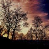Kronor av träd på skymning Arkivbild