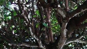 Kronor av tropiska träd med den ljusa eftermiddagsolen och strålar man för bali town för solnedgång för form för härlig indonesia lager videofilmer
